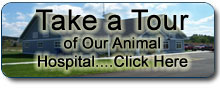Companion Animal Hospital - Take our tour.
